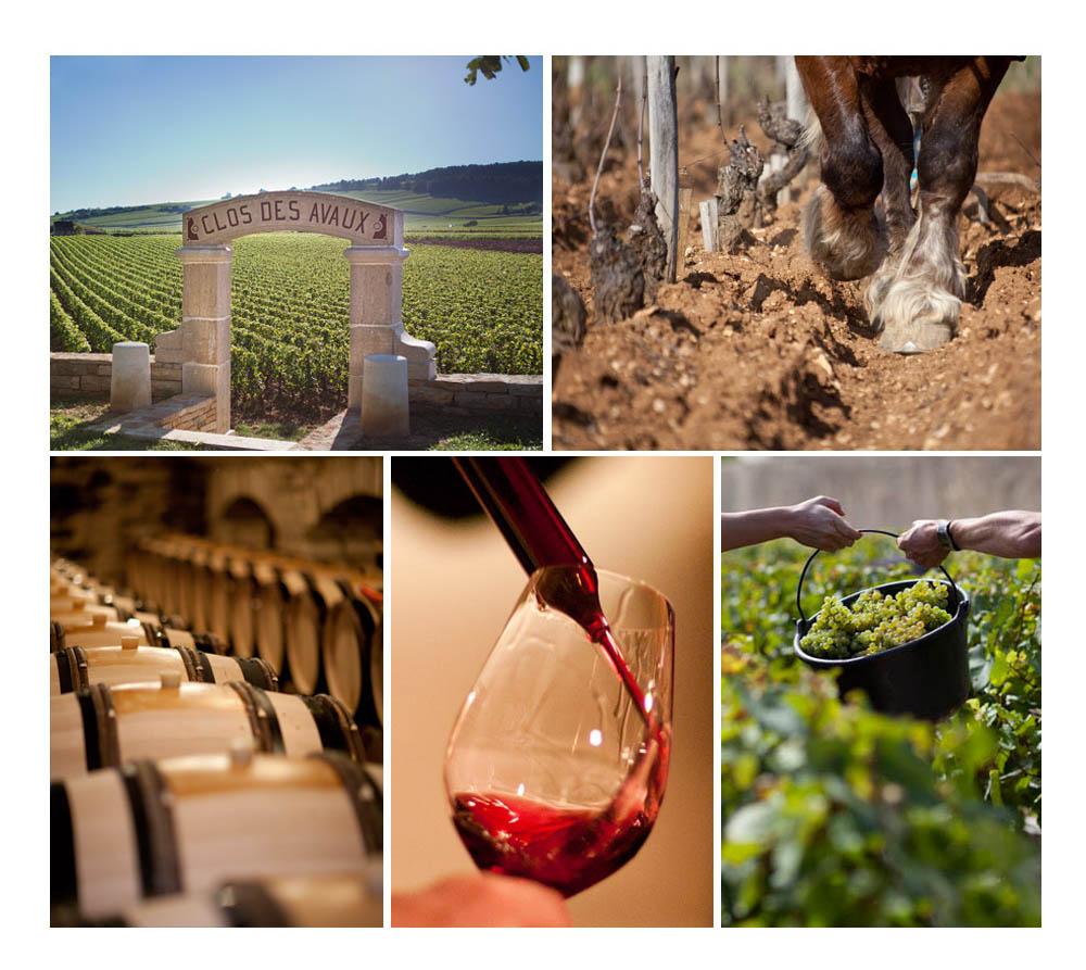 Le vin est fils du soleil et de la terre